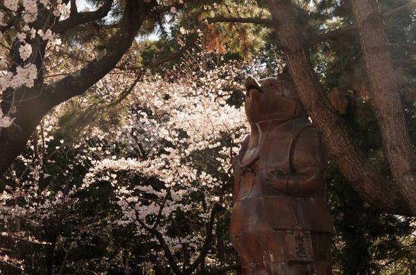 0001桜190331-8_1110.JPG