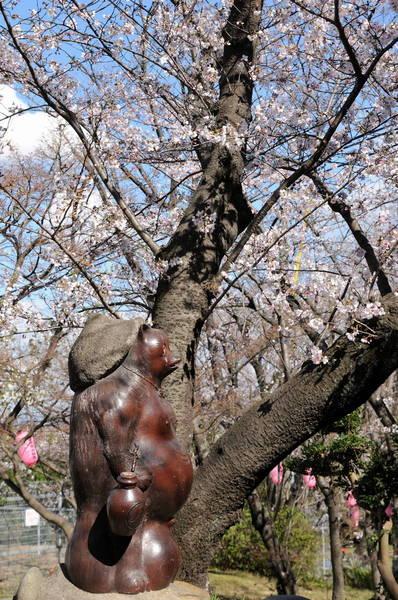 0002桜190331-7_1109.JPG