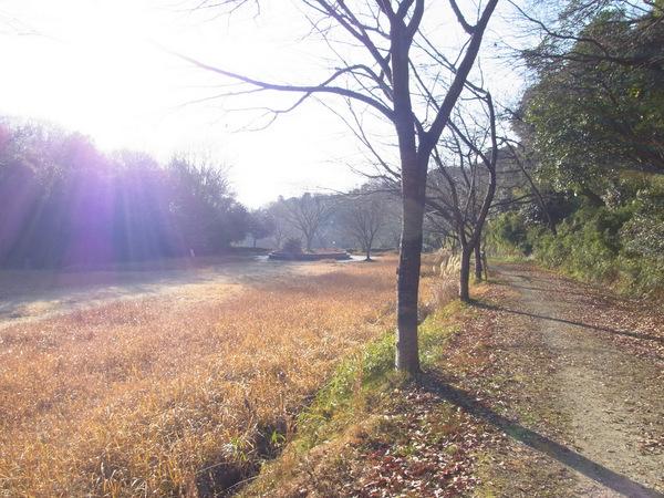 03-公園 朝.jpg