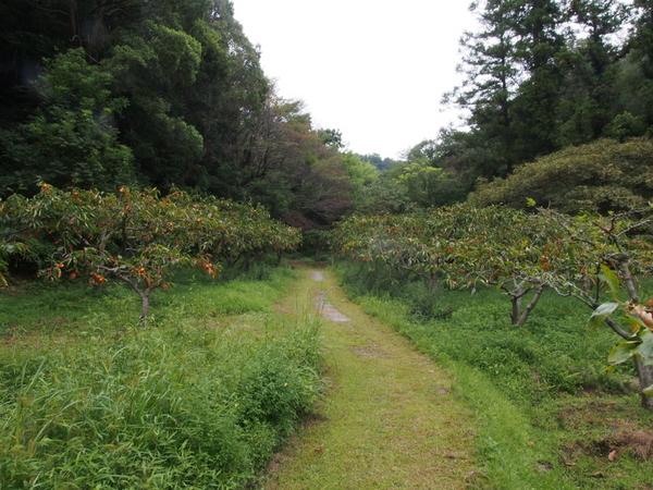 柿畑.jpg